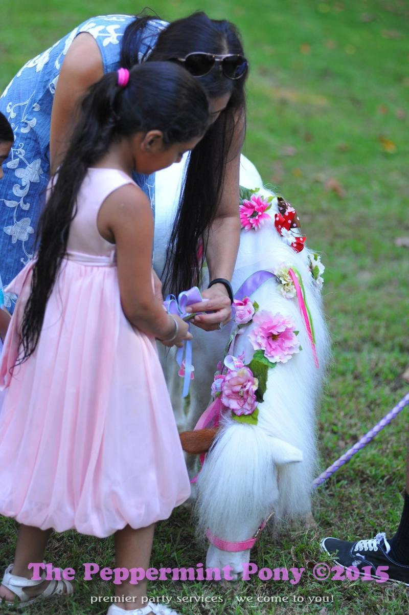Pretty girl pinning ribbons and bows on our mini horse
