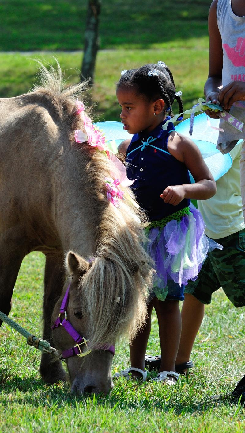 Duncan the mini horse, grazing while being decorated by a tiny fairy