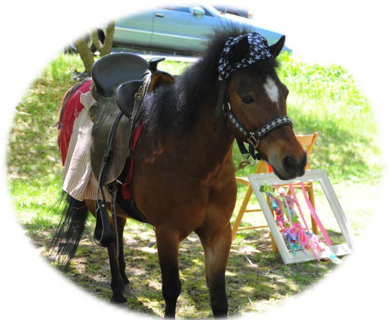 The Peppermint Pony Jesse James, our Pirate Pony Ahoy Mateys!
